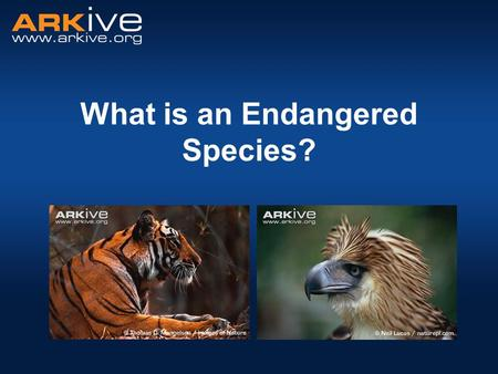 What is an Endangered Species?. A species that is at risk of extinction A species with a small or declining population, or a very small range. What is.