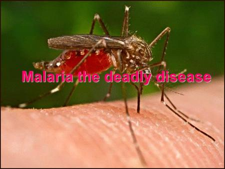 Malaria the deadly disease