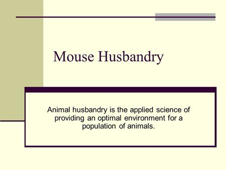 Mouse Husbandry Animal husbandry is the applied science of providing an optimal environment for a population of animals.