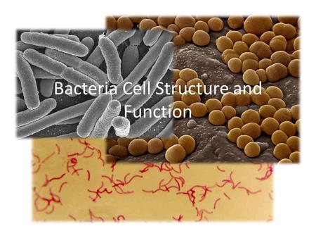 Bacteria Cell Structure and Function. cytoplasm Gelatin-like, flows inside cell Contains everything cell needs to carry out life.