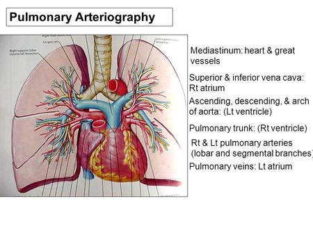 Pulmonary Arteriography Mediastinum: heart & great vessels Superior & inferior vena cava: Rt atrium Ascending, descending, & arch of aorta: (Lt ventricle)