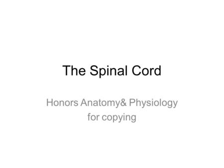 The Spinal Cord Honors Anatomy& Physiology for copying.