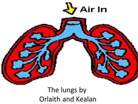 The lungs by Orlaith and Kealan. What lungs do Without the oxygen you breathe in, we would quickly die. Our lungs make sure that air we breathe in can.