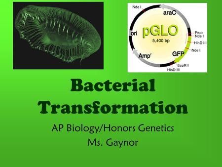 Bacterial Transformation AP Biology/Honors Genetics Ms. Gaynor.