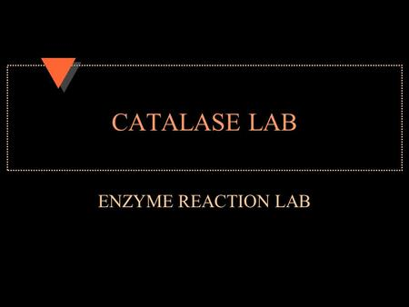 CATALASE LAB ENZYME REACTION LAB. NORMAL CATALASE ACTIVITY u Reaction rate of 4 u Room temperature u What did the bubbling represent?