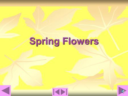 Spring Flowers Spring Flowers that Grow from Bulbs Chapter 1.