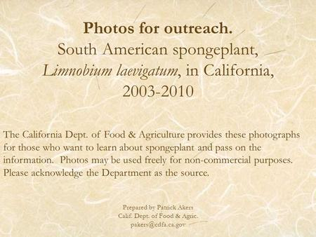Photos for outreach. South American spongeplant, Limnobium laevigatum, in California, 2003-2010 Prepared by Patrick Akers Calif. Dept. of Food & Agric.