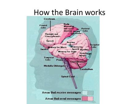 How the Brain works.