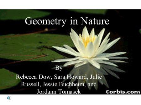 Geometry in Nature By Rebecca Dow, Sara Howard, Julie Russell, Jessie Buchheim, and Jordann Tomasek.