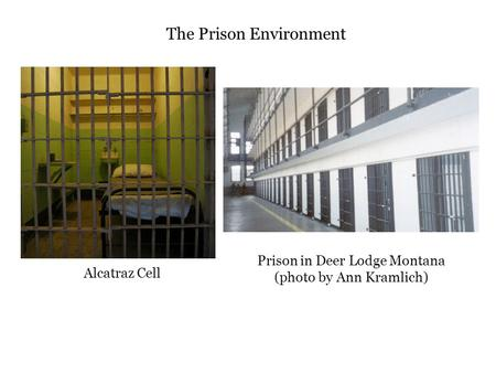 prison enviroment Twenty years of corrections – the evolution of offender rehabilitation   (aa) philosophy in the wider social and political environment, however, developments .