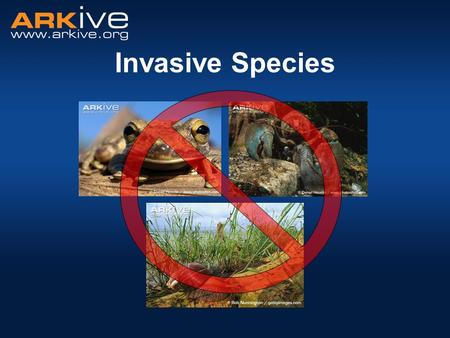 Invasive Species Introduce the session - today we are going to look at invasive species. We will talk about: What an invasive species is, and how it differs.