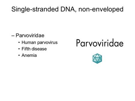Single-stranded DNA, non-enveloped
