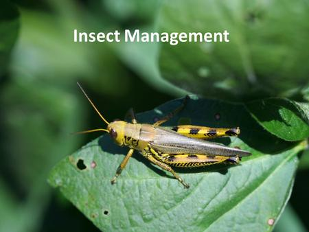 Insect Management. Know your system… What is the plant, what is normal? Most plant health problems are not caused by biotic (living) factors such as insects.