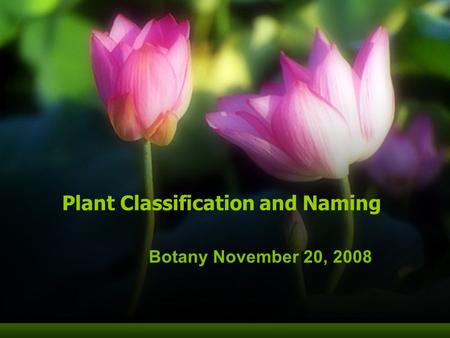 Plant Classification and Naming Botany November 20, 2008.