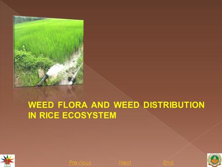 Previous NextEnd WEED FLORA AND WEED DISTRIBUTION IN RICE ECOSYSTEM.