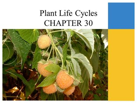 Plant Life Cycles CHAPTER 30
