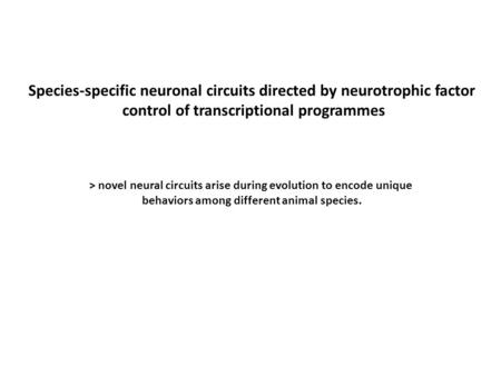 Species-specific neuronal circuits directed by neurotrophic factor control of transcriptional programmes > novel neural circuits arise during evolution.