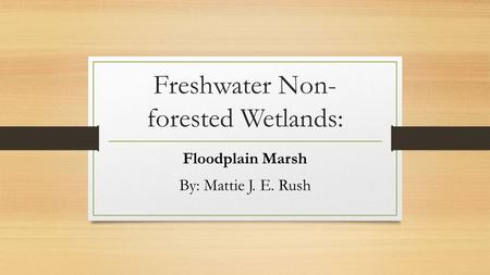 Freshwater Non- forested Wetlands: Floodplain Marsh By: Mattie J. E. Rush.