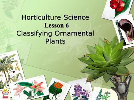 Horticulture Science Lesson 6 Classifying Ornamental Plants.