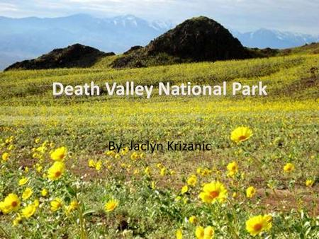 By: Jaclyn Krizanic. What year did the park become an official National Park and why? Death Valley become recognized as a national monument by President.