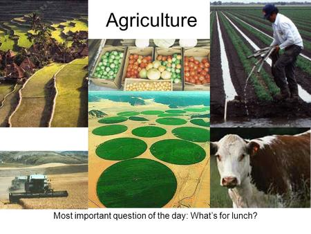 Agriculture Most important question of the day: What's for lunch?