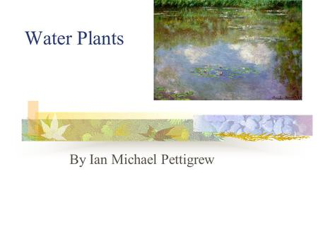 Water Plants By Ian Michael Pettigrew. Table of Contents Questions About Water Plants………………1 Types of Water Plants……………………….2 Providing Food and Shelter………………….3.