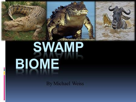By Michael Weiss. A swamp has a mild climate. There are a lot all over Louisiana and Australia. Habitats include trees, shrubs,creeks, lakes, and rivers.