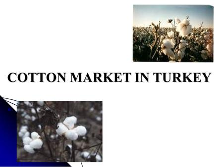 COTTON MARKET IN TURKEY. CONTENT I. Introduction II. General View Of The Market Cotton Production in Turkey Cotton Production in Turkey Cotton Consumption.