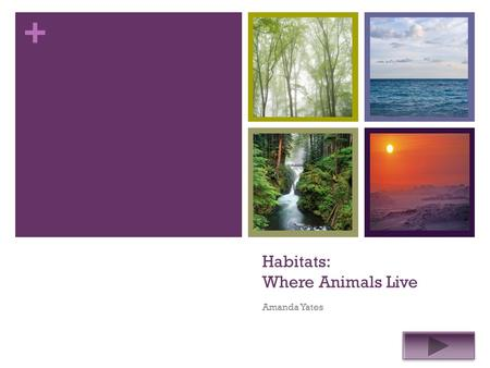 + Habitats: Where Animals Live Amanda Yates. + Grade Level: 2 Subject: Science Summary: The purpose of this power point is to reinforce students' knowledge.