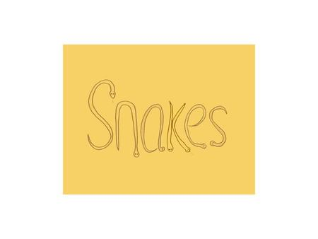 Snakes are a member of the reptile family. The reptile family includes lizards, turtles, alligators and crocodiles, and snakes.