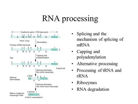 RNA processing Splicing and the mechanism of splicing of mRNA