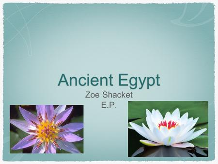 Ancient Egypt Zoe Shacket E.P..