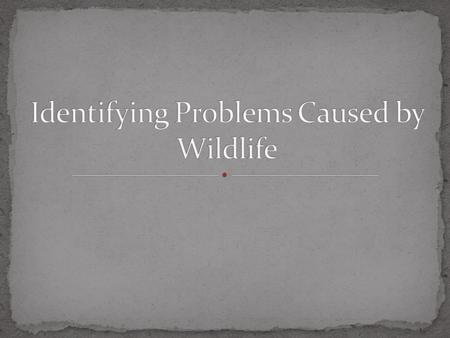 1. Describe human health problems associated with wildlife. 2. Explain other problems related to wildlife. 3. Identify laws associated to wildlife control.
