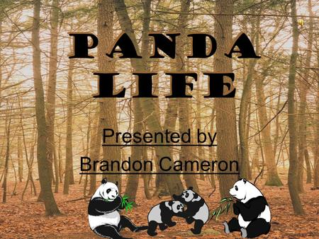 Panda life Presented by Brandon Cameron Presented by Brandon Cameron.