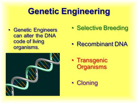 Genetic Engineering Genetic Engineers can alter the DNA code of living organisms. Selective Breeding Recombinant DNA Transgenic Organisms Cloning Selective.