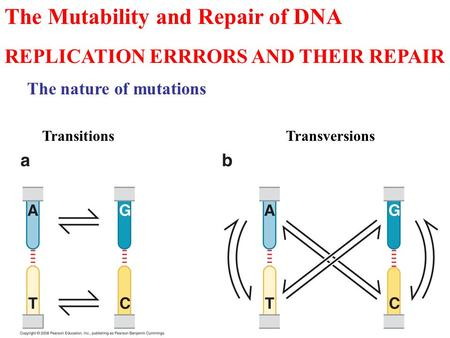 The Mutability and Repair of DNA