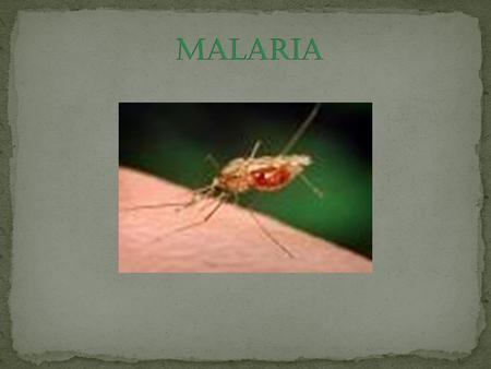 Mosquito nets create a protective barrier against malaria-carrying mosquitoes that bite at night.