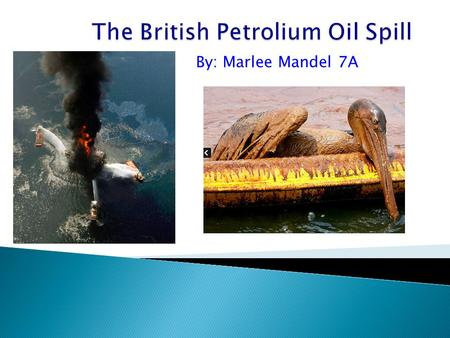 "british petroleum oil spill disaster crisis Yet three years later, the bp disaster has been largely forgotten, both  the bp  crisis blasted the ""scandalously close relationship"" between oil."
