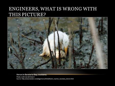ENGINEERS, WHAT IS WRONG WITH THIS PICTURE? Heron in Barataria Bay, Louisiana. Photo credit: Gerald Hebert Source: