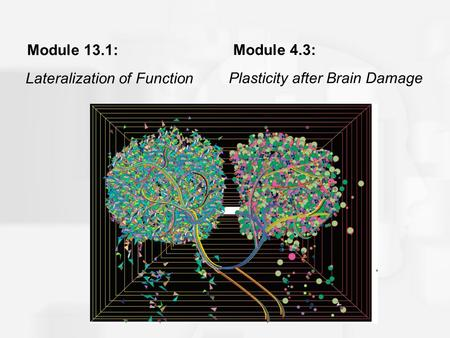 Module 13.1: Lateralization of Function Module 4.3: Plasticity after Brain Damage.
