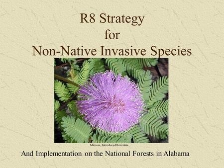 R8 Strategy for Non-Native Invasive Species And Implementation on the National Forests in Alabama Mimosa, Introduced from Asia.
