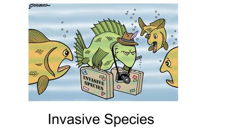 Invasive Species. What are native species? Native species are those that normally live and thrive in a particular community. They occupy specific habitats.