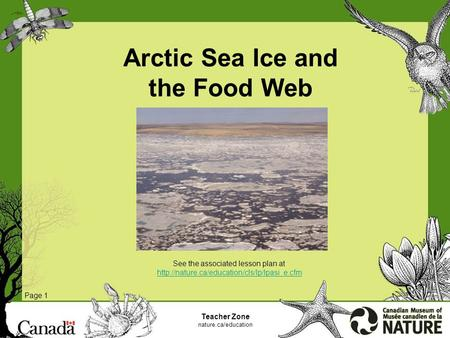 Arctic Sea Ice and the Food Web Page 1 Teacher Zone nature.ca/education See the associated lesson plan at