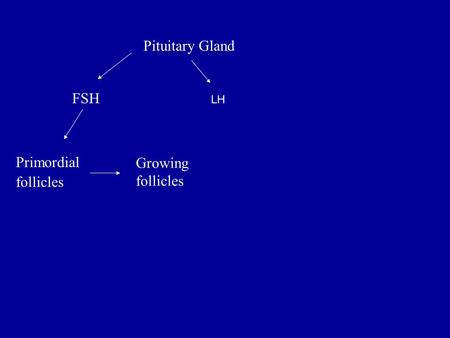 Pituitary Gland FSH Primordial follicles Growing follicles LH.