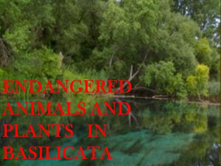 ENDANGERED ANIMALS AND PLANTS IN BASILICATA. Fauna.