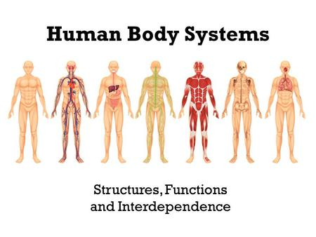 Human Body Systems Structures, Functions and Interdependence.