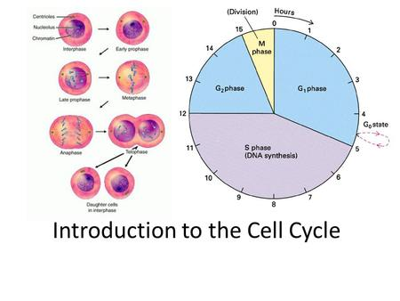 Introduction to the Cell Cycle