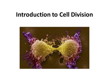 Introduction to Cell Division