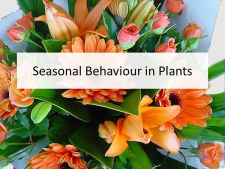 Seasonal Behaviour in Plants. Photoperiodism in Plants: Flowering Photoperiodism: regulation of seasonal activity by day length (photoperiod) Garner &