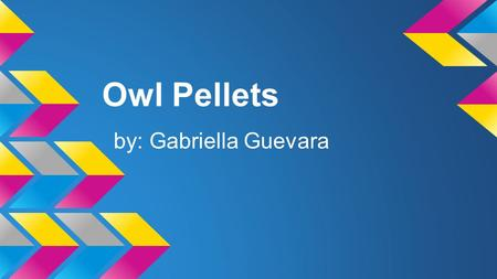 Owl Pellets by: Gabriella Guevara Introduction Comparative Question Is a pocket gopher eaten more by the barn olws daily or the spotted owl? In the.